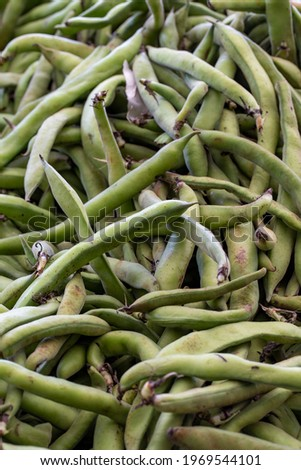 fresh broad beans in the market. Broad beans in bulk. ripe broad beans in a street market. Food background Royalty-Free Stock Photo #1969544101