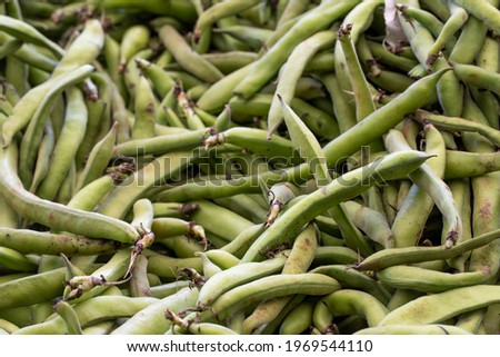 fresh broad beans in the market. Broad beans in bulk. ripe broad beans in a street market. Food background Royalty-Free Stock Photo #1969544110