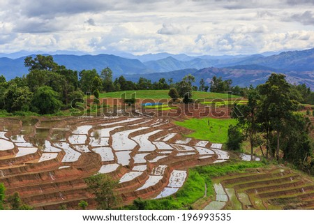 Terraced Rice Paddy Field in Chiangmai, Thailand. #196993535
