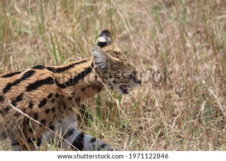 pictures of animal safari in africa's masai mara
