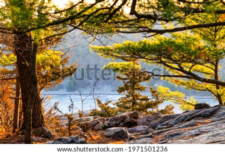 Branches of coniferous trees on the hill. Coniferous tree branches. Coniferous forest trees Royalty-Free Stock Photo #1971501236