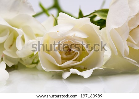 Beautiful white rose with details  #197160989