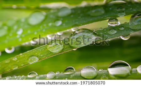 Raindrops on the grass. Nature Royalty-Free Stock Photo #1971805070