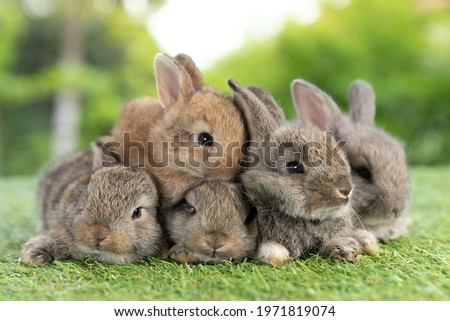 Group of healthy Lovely bunny easter fluffy rabbits, Adorable baby rabbit on green nature background. The Easter brown hares. Close - up of a rabbit.