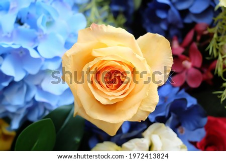 A yellow rose with a flower in the background.Free space for text.the background.