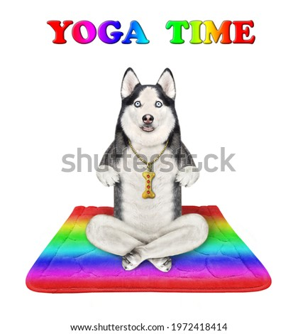 A dog husky is doing yoga exercises on a color square fitness mat. Zen yoga. White background. Isolated.