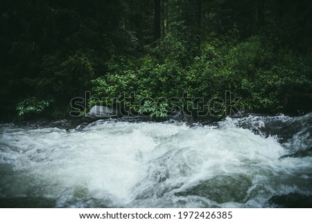 Green forest landscape with wild thickets near powerful mountain river. Blurred power turbulent rapids in mountain creek in dark forest. Atmospheric nature scenery with mountain river and wild flora. Royalty-Free Stock Photo #1972426385