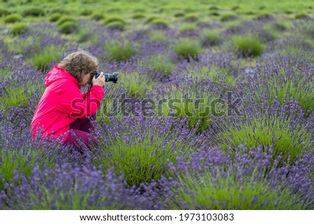 Woman is taking a picture in a lavender field in Poland.