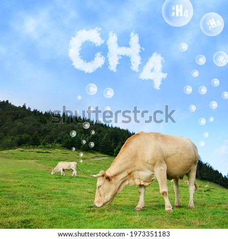 Cow grazing on pasture with CH4 text from clouds at the background. The concept of methane emissions from livestock. Royalty-Free Stock Photo #1973351183