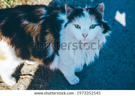 cute cat look at you Royalty-Free Stock Photo #1973352545