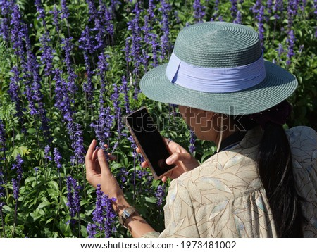 Asian female tourists are taking pictures of lavender flowers with their mobile phones on a romantic trip to a beautiful purple lavender flower field in the daytime.