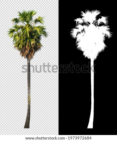 sugar palm tree on transparent picture background with clipping path and alpha channel