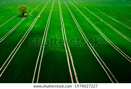 countryside landscape, tree standing in the field. Royalty-Free Stock Photo #1974027227