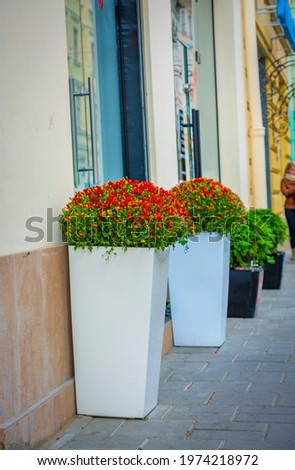 Tall white street vases with red flowers Royalty-Free Stock Photo #1974218972