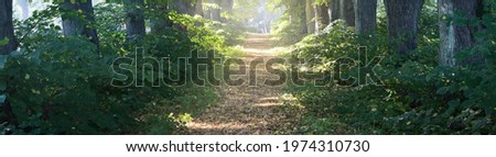 Single lane rural gravel road through the tall green linden trees. Sunlight flowing through the tree trunks. Fairy forest scene. Art, hope, heaven, wilderness, loneliness, pure nature concepts Royalty-Free Stock Photo #1974310730