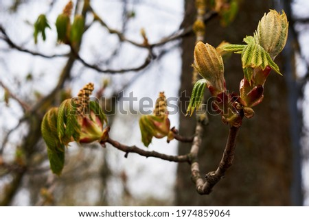 Branches of trees and bushes with buds and first leaves in spring  Royalty-Free Stock Photo #1974859064