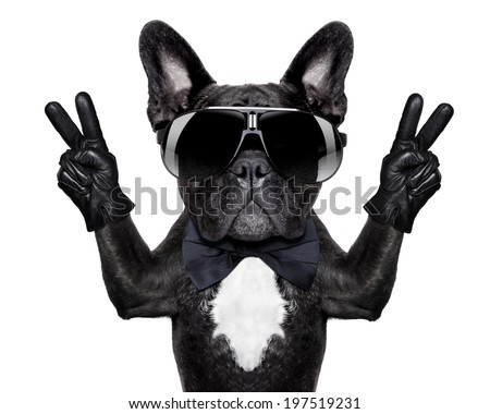 french bulldog with victory or peace fingers and black glasses
