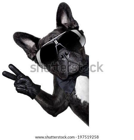 cool dog with peace or victory fingers beside a white blank banner or placard