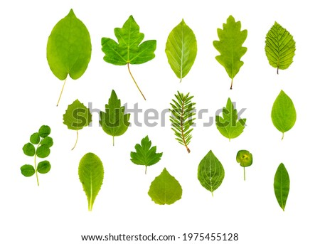 Mixed Plant and Tree Leaves alpha Royalty-Free Stock Photo #1975455128