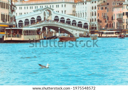 sea gull swimming in grand canal venice bridge with boats on background