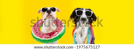 Banner funny dogs summer. American Staffordshire  inside an ring inflatable and a border collie wearing a colorful garland. Isolated on yellow background Royalty-Free Stock Photo #1975675127