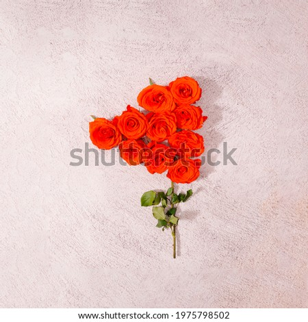 A bunch of vibrant coral red roses coming out of a unique stem. Romantic moments creative design. Floral flag concept.