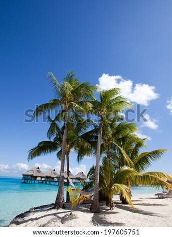 The island with palm trees in the ocean #197605751