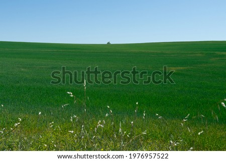 Green grass nature landscape background photo, desktop wallpaper, anatolia region