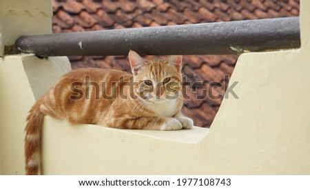 The orange cat getting rest in the balcony Royalty-Free Stock Photo #1977108743
