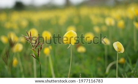 Field full of yellow flower Royalty-Free Stock Photo #1977116783