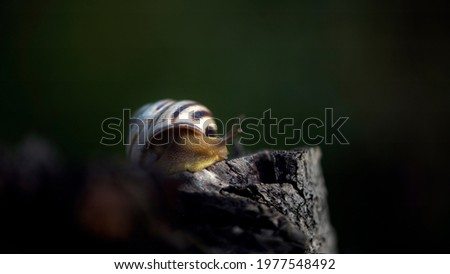 Snail on the slope. Blurred background, focus on the reptile. Background picture.