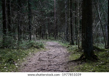 path through the forest trees, nature green wood  Royalty-Free Stock Photo #1977851039
