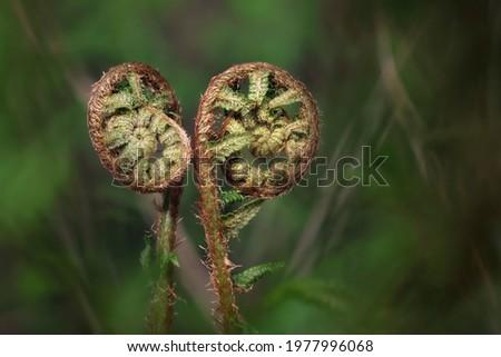 Fresh fern - detailed macro shot Royalty-Free Stock Photo #1977996068