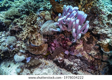 Very close photo of many blue tube sponges at the side of densely populated coral reef. Colorful reef colony in tropical sea of Indonesia, Bali. Picture taken during Scuba dive in tropical water