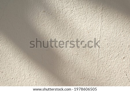 The background of the beige cement wall has a dark shadow overlay from the sunlight. Royalty-Free Stock Photo #1978606505