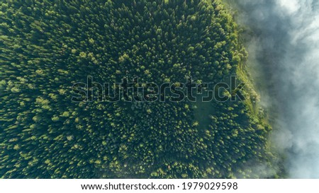 Aerial top view of misty forest trees in forest in Canada. Drone photography. Rainforest ecosystem and healthy environment concept. Foggy morning