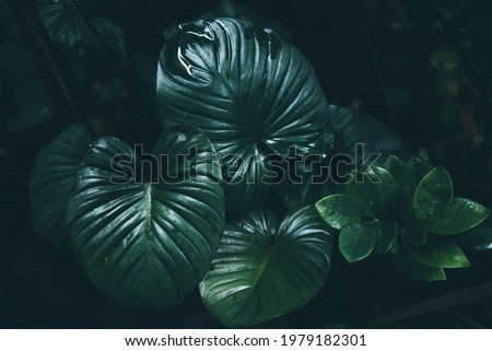 green leaf of tropical forest plant living in nature garden, exotic jungle foliage background, palm floral and monstera, botany flora decoration in environment Royalty-Free Stock Photo #1979182301
