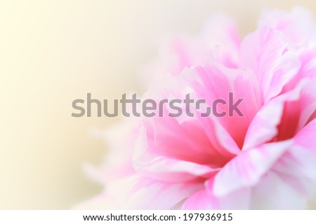 beautiful flowers made with color filters abstract #197936915