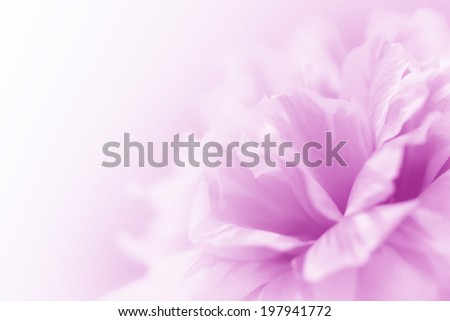 beautiful flowers made with color filters abstract #197941772