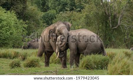 A playful fight of elephants  Royalty-Free Stock Photo #1979423045