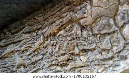 Bark is the outermost layers of stems and roots of woody plants. Plants with bark include trees, woody vines, and shrubs. Bark refers to all the tissues outside the vascular cambium and is a nontechni Royalty-Free Stock Photo #1980102167