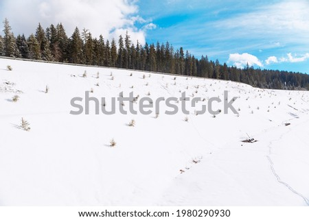 Fir Trees on the Snowy Hill . Coniferous Forest in the Winter