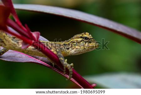 Green lizard on branch, green lizard sunbathing on branch, green lizard climb on wood, Jubata lizard Royalty-Free Stock Photo #1980695099