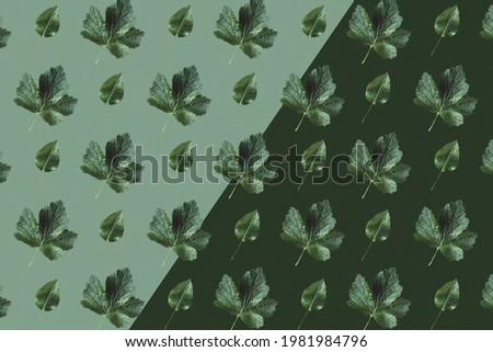 Pattern of different leaves. Background.