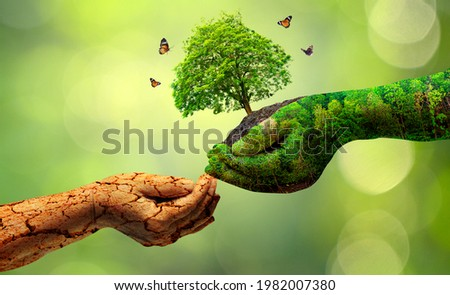 environment Earth Day In the hands of trees growing seedlings. Bokeh green Background Female hand holding tree on nature field grass Forest conservation concept Royalty-Free Stock Photo #1982007380