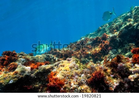 underwater image of tropical fishes #19820821