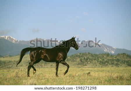 The Picture Of A Horse