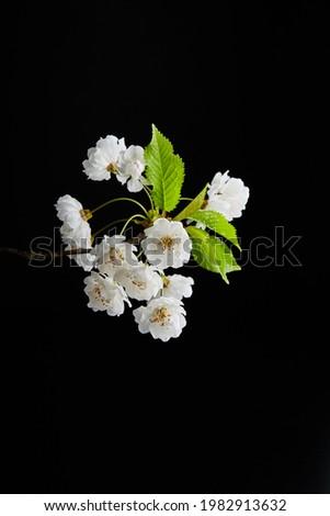 White flower photography on black background