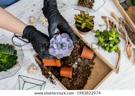 Top view florist female hands arrangement succulents with ground into glass florarium at workshop. DIY creating decorative art composition with vegetation tropical greenery plants at botanical studio Royalty-Free Stock Photo #1983822974