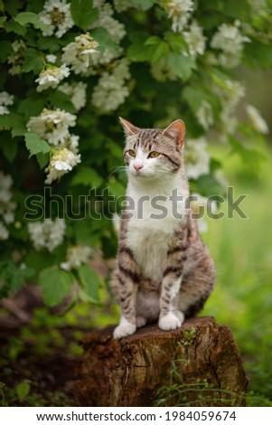 Photo of a tabby cat near a flowering bush.